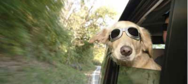 10 Reasons  NOT to Travel  with Your Pets